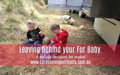 A tough decision: Leaving your fur baby behind!