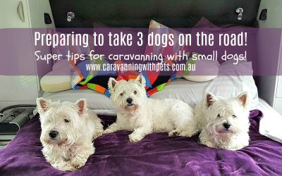 Preparing to take 3 dogs on the road full time! Are we nuts?