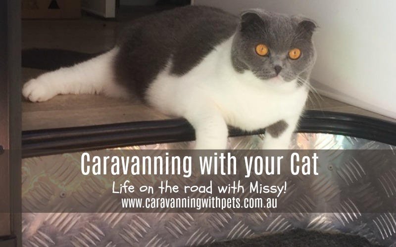 Caravanning with your Cat – Full time!