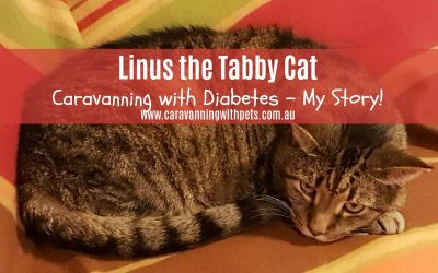 I am Linus the Tabby Cat and this is my story!