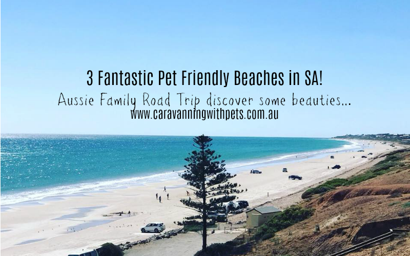 3 Fantastic Pet Friendly Beaches in South Australia