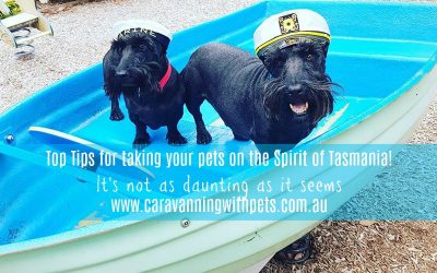 Top Tips for taking your pets on the Spirit of Tasmania