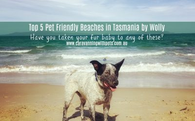 Top 5 Pet Friendly Beaches in Tasmania by Wolly