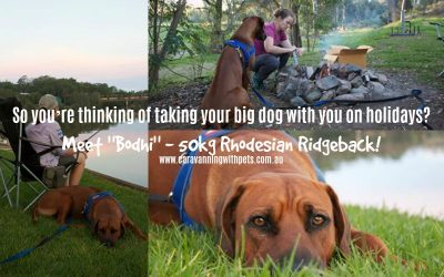 So you're thinking of taking your big dog with you on holidays?